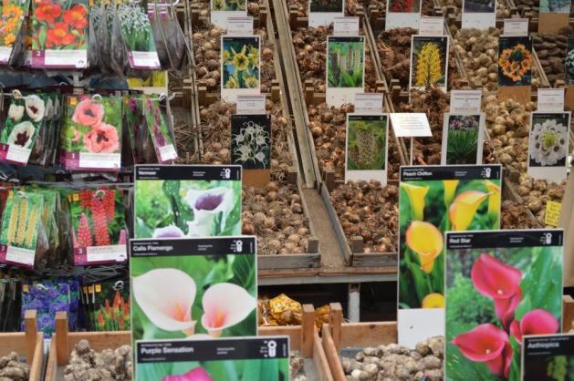 Le marché aux fleurs et ses bulbes de toutes sortes