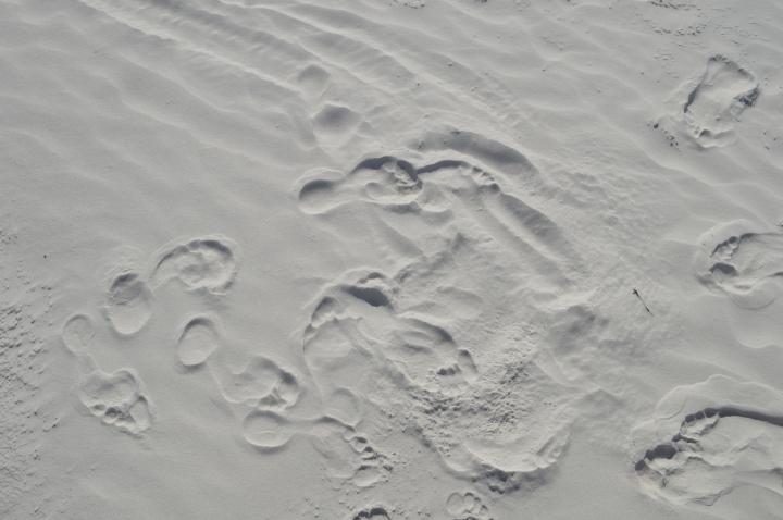 FLORIDE31